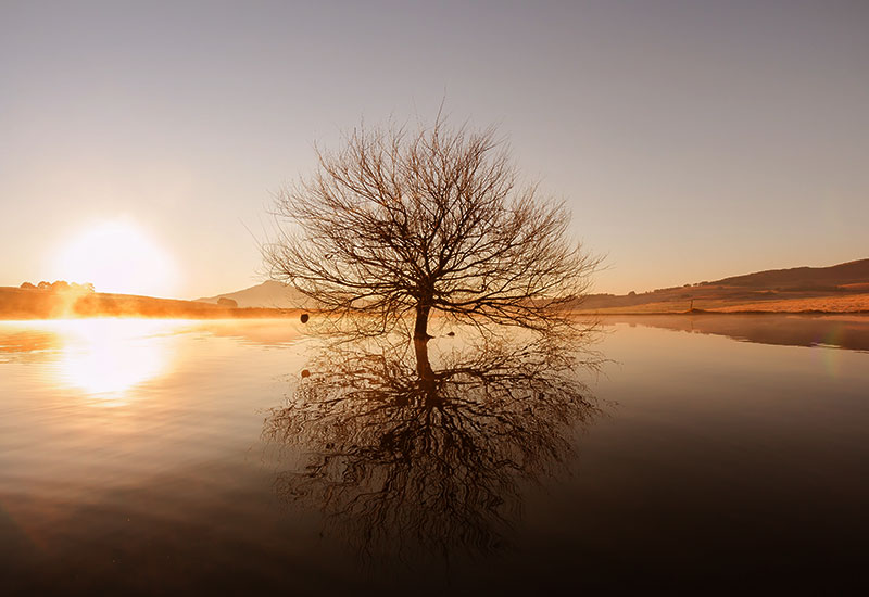 About Image of tree in water with sunset in the background