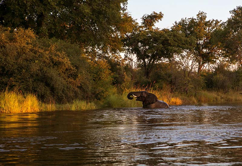 About Image of elephant NSUMBU NATIONAL PARK crossing river at